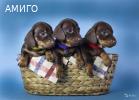 Щенки таксы миниатюрной/кроличьей
